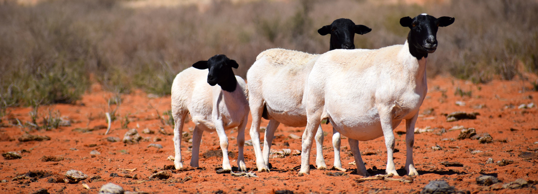 Feedmaster Sheep Feed
